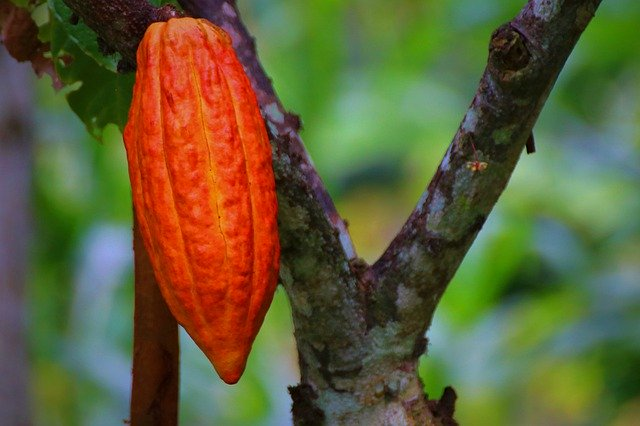 kakaoは肌の救世主!