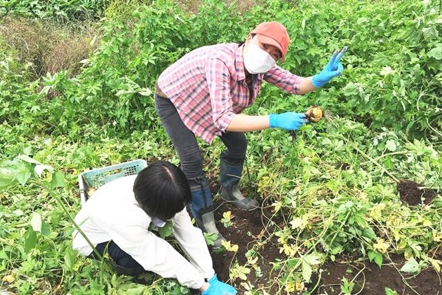 農薬・化学肥料を使わない農業・翔栄ファーム
