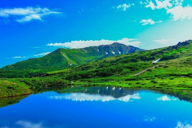 北海道の大自然が育んだ黒豆