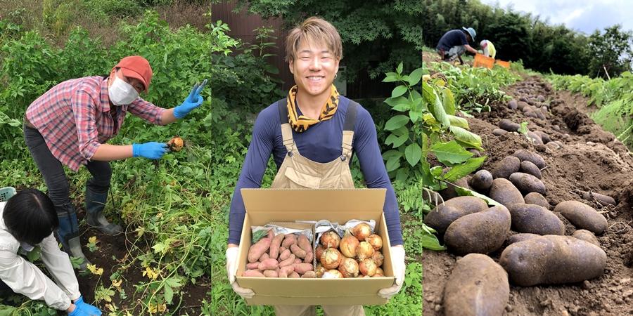 今年収穫の玉ねぎとジャガイモのセット