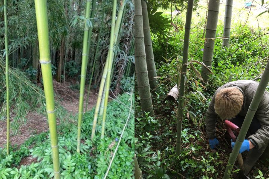 竹林とタケノコ掘り