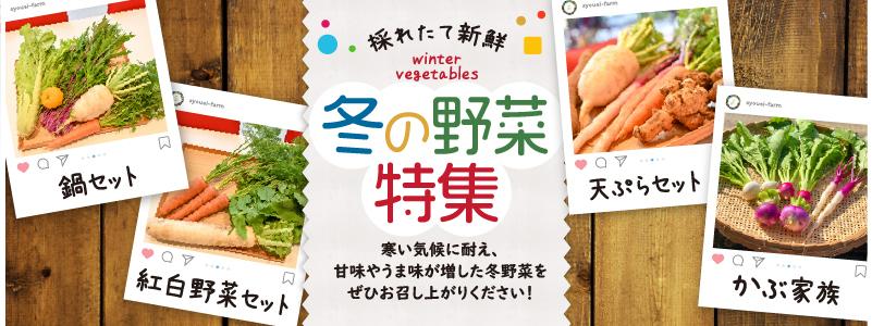 冬の野菜特集